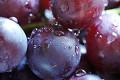 Grape_2