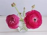 Flower2_20210327143301