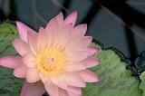 Lotus_20191208125901